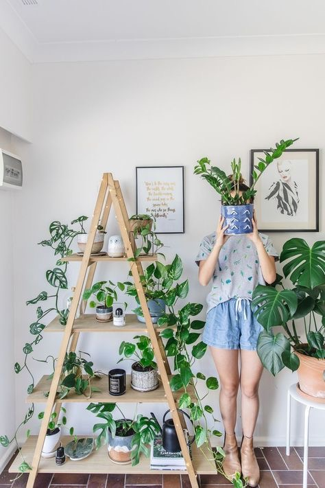 51 Awesome Indoor Plants Decor Ideas