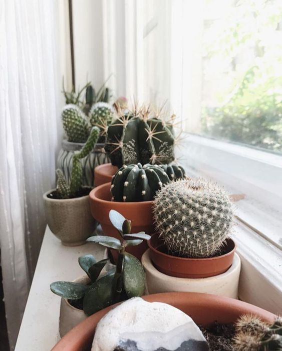 50 Dazzling Yet Beautiful Cactus Pots Page 22 Of 50 Breyi Plant aesthetic laptop wallpapers top free plant aesthetic laptop. 50 dazzling yet beautiful cactus pots